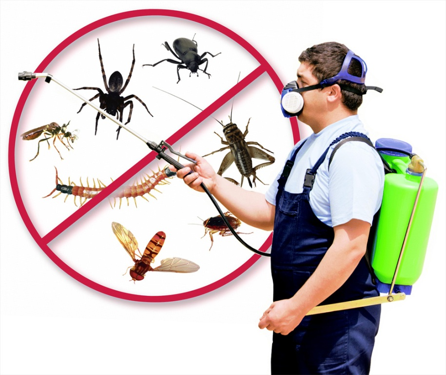 Benefits Of Having Year-Round Pest Control Maintenance Services